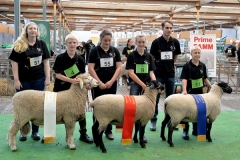 2016-SA-Sheep-Expo_DSC_0174_D