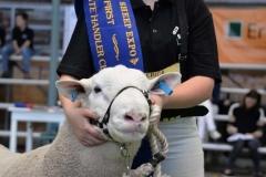 2016-SA-Sheep-Expo_DSC_0206
