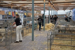 2016-SA-Sheep-Expo_DSC_0225
