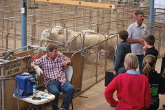 2016-SA-Sheep-Expo_DSC_0409