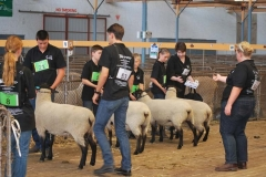 2016-SA-Sheep-Expo_DSC_0462