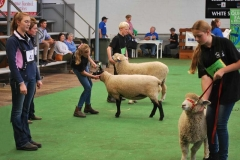 2016-SA-Sheep-Expo_DSC_0465_stitch